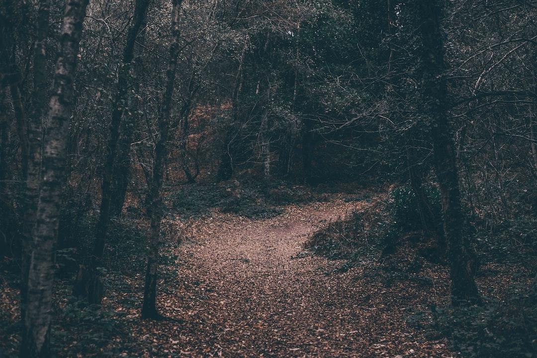 Autumnal Life
