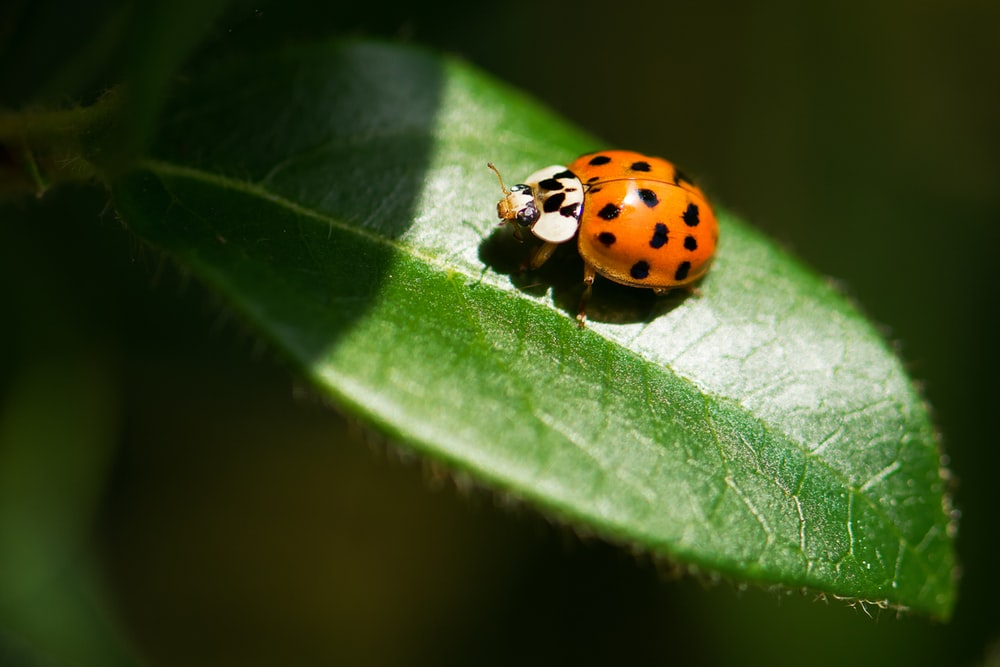Go To Homepage >> Animal, butterfly, insect and invertebrate | HD photo by Vincent van Zalinge (@vincentvanzalinge ...