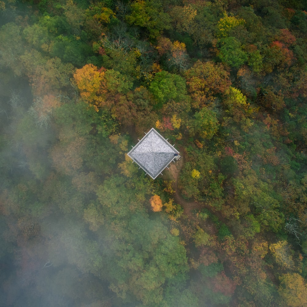 bird's eye view of house in the middle of the forest