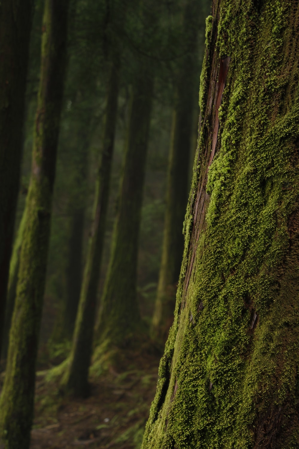 moss on trees in shallow focus photography