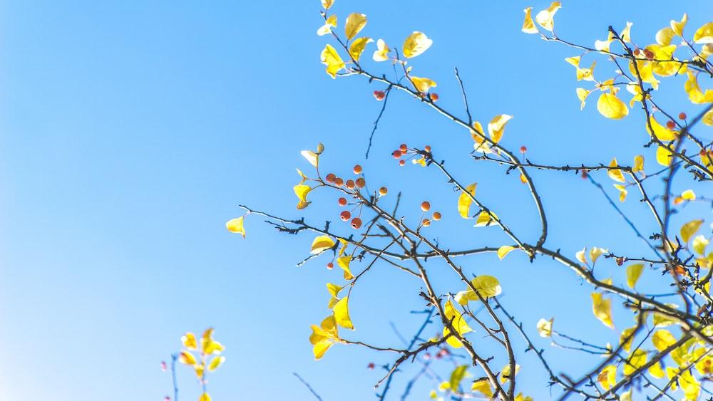 bottom view of yellow tree