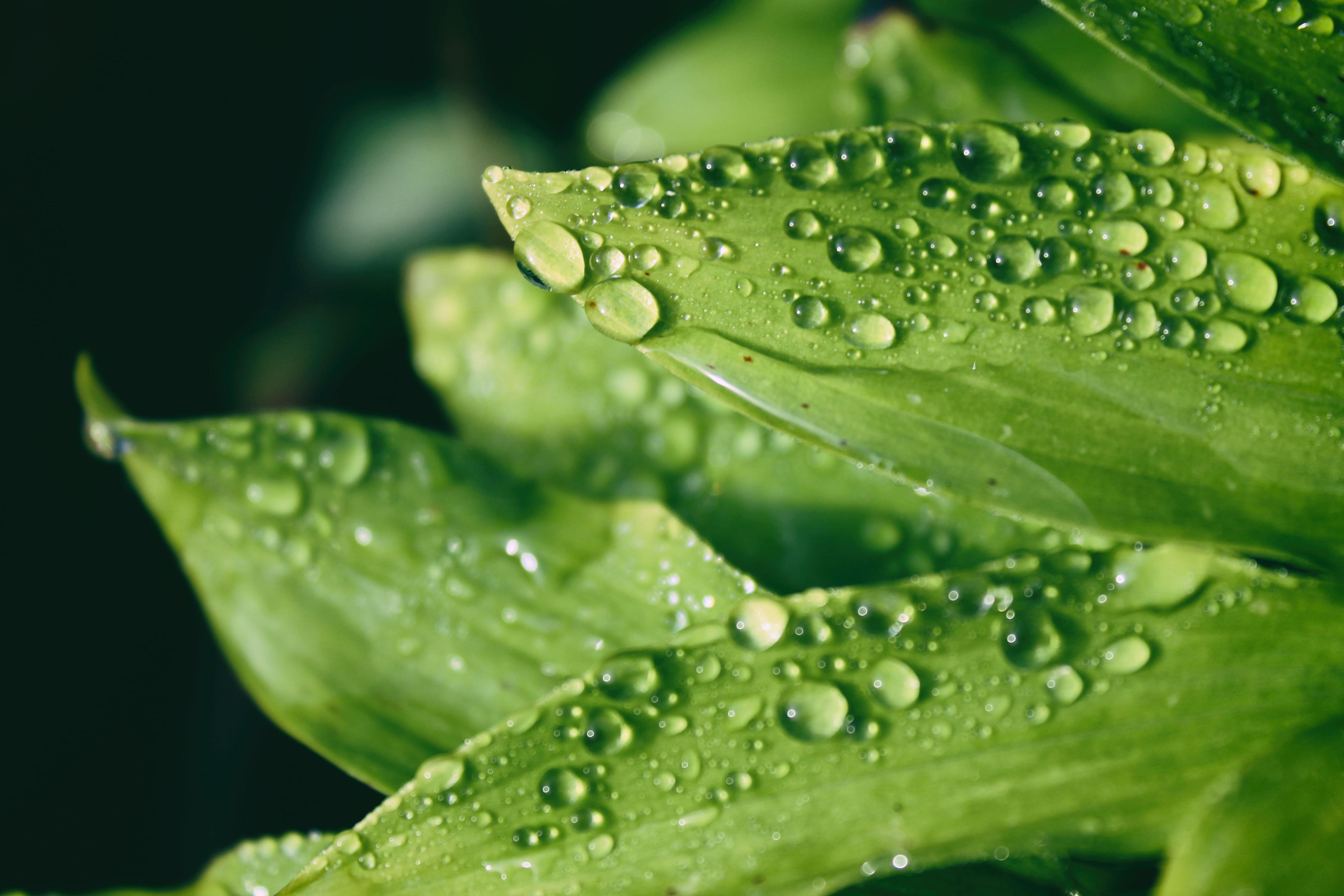 macro shot of droplets on leaves