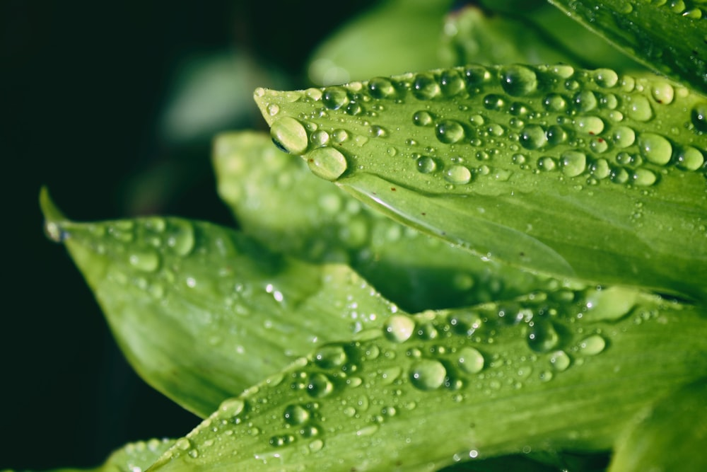 macro shot of droplets on leaves