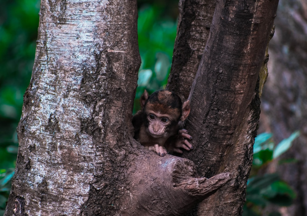 monkey on tree