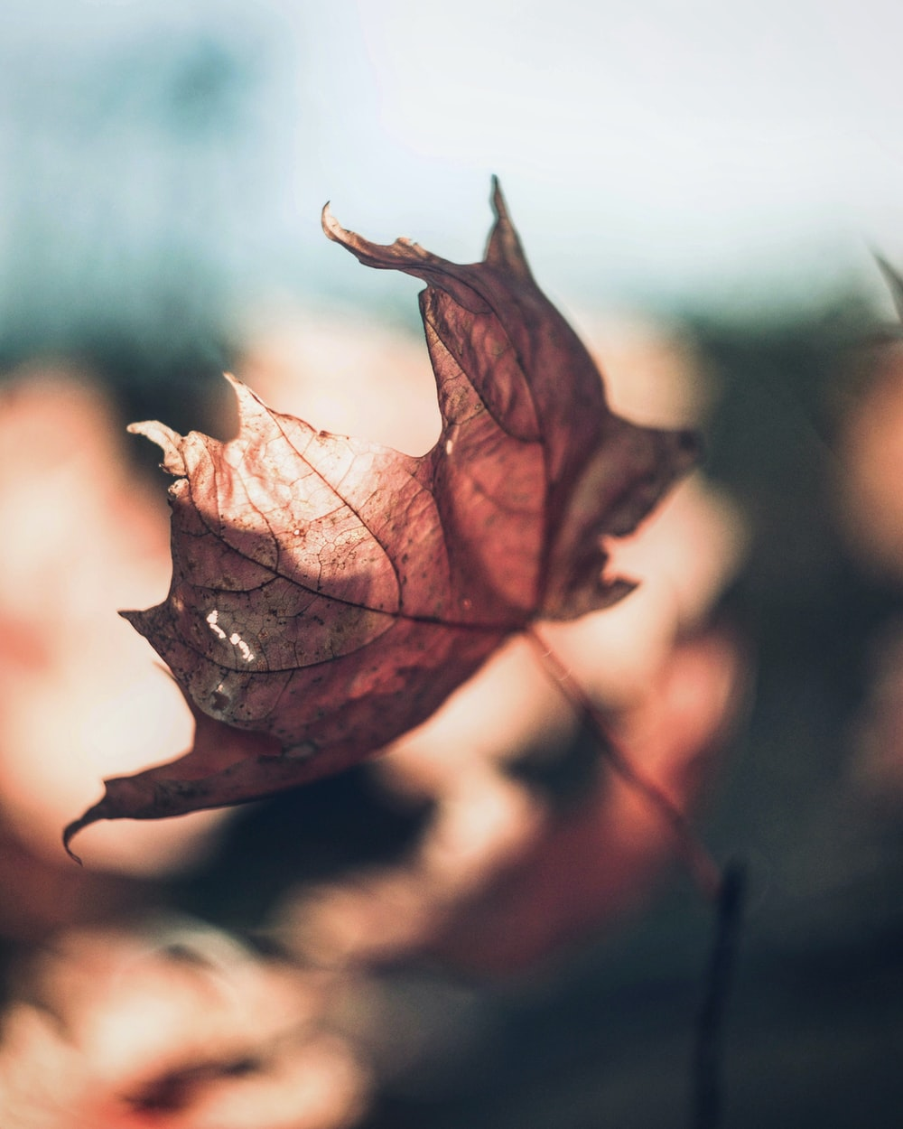 selective focus photography of dried leaf