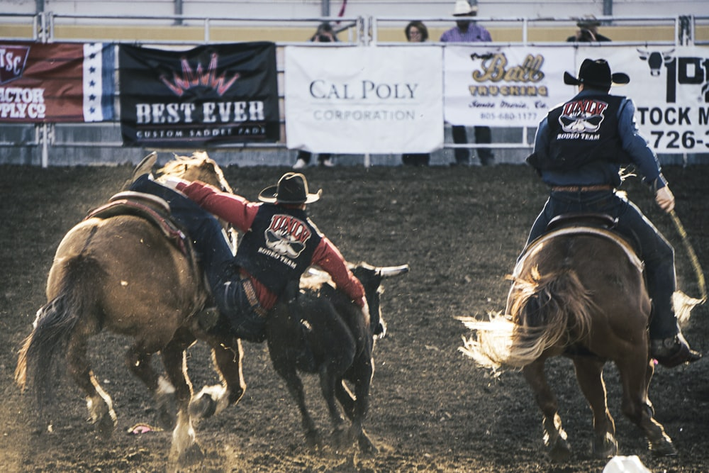 two cowboys riding a horse while catching a bull