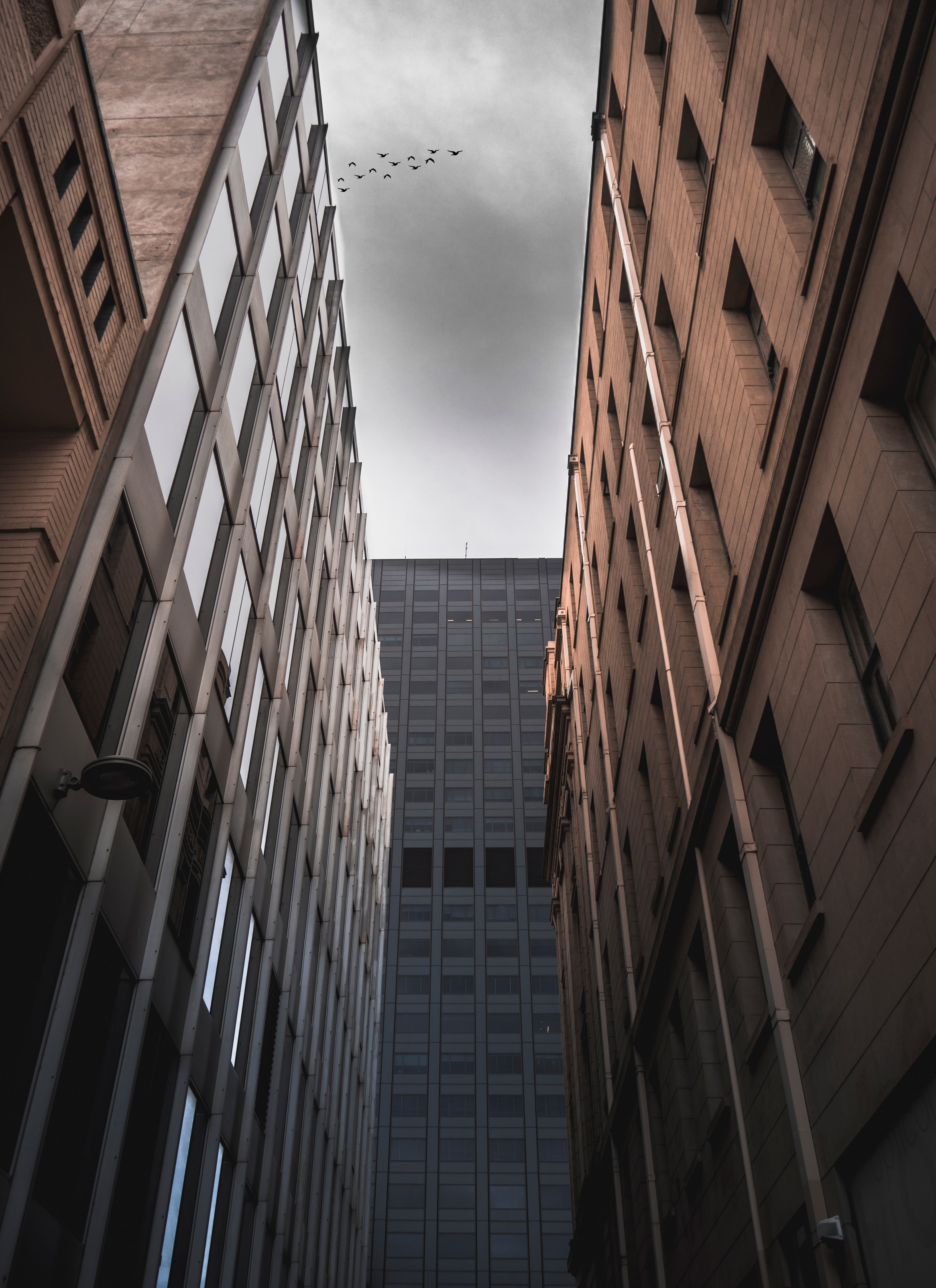 low angle photograph of flock of bird flying above buildings