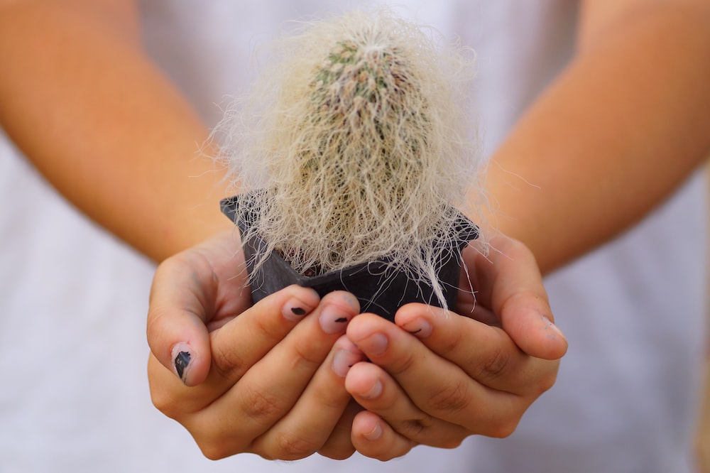 woman showing cactus