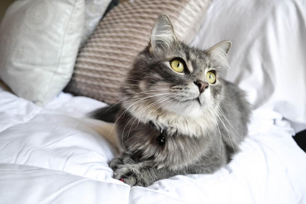 cats 20 best free cat pet animal and eye photos on unsplash