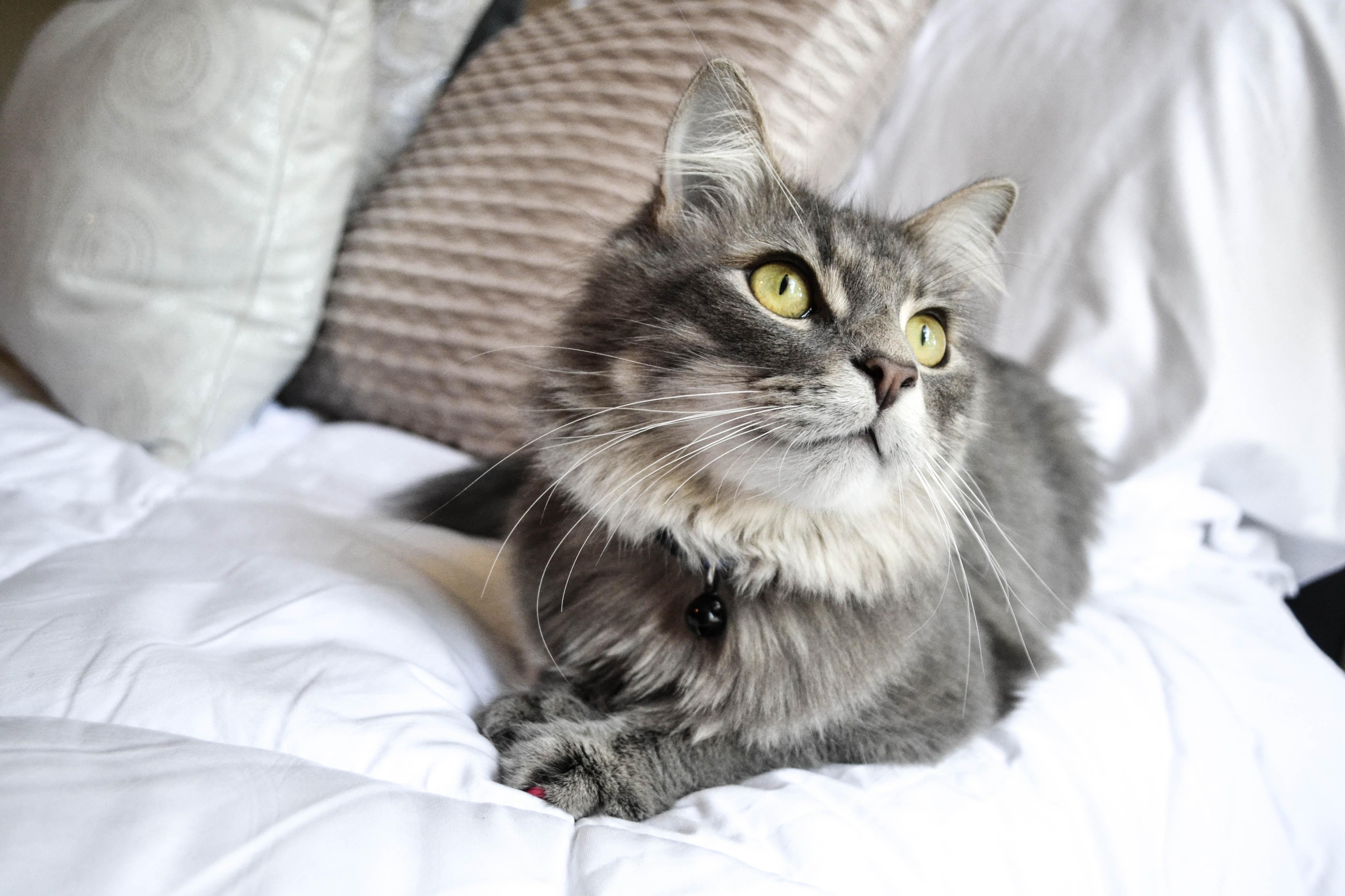 gray cat on white textile