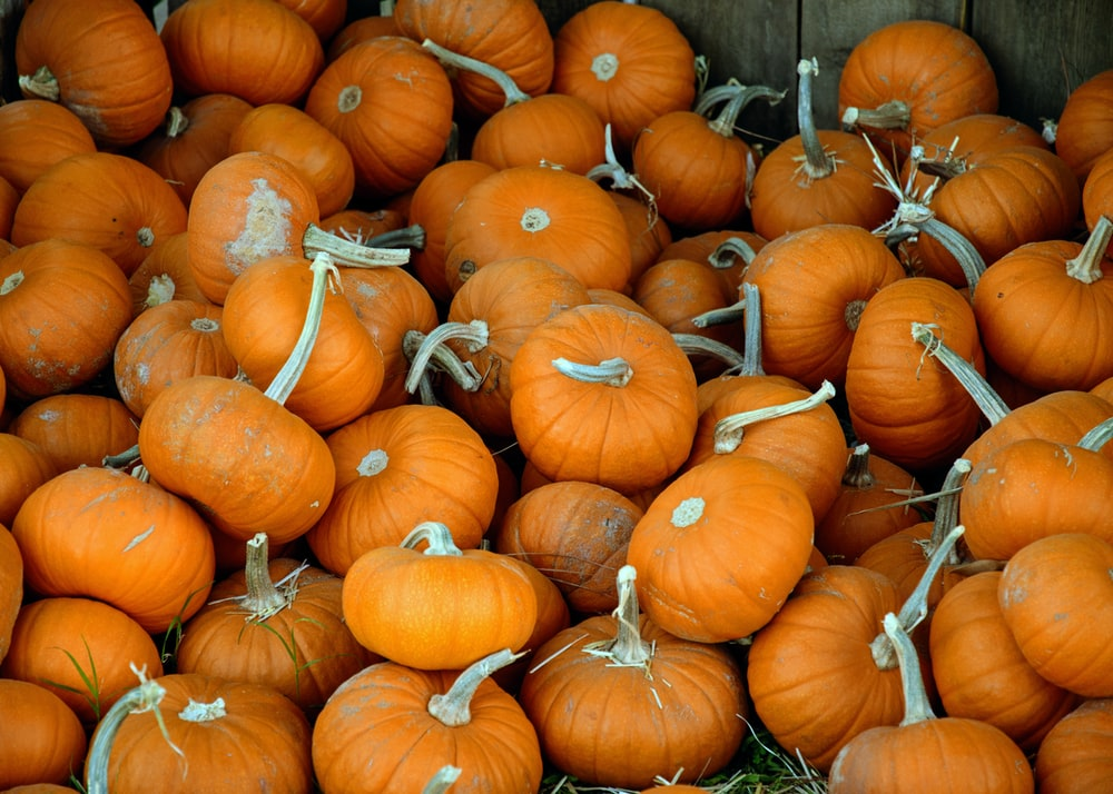 landscape photography of orange pumpkin lot