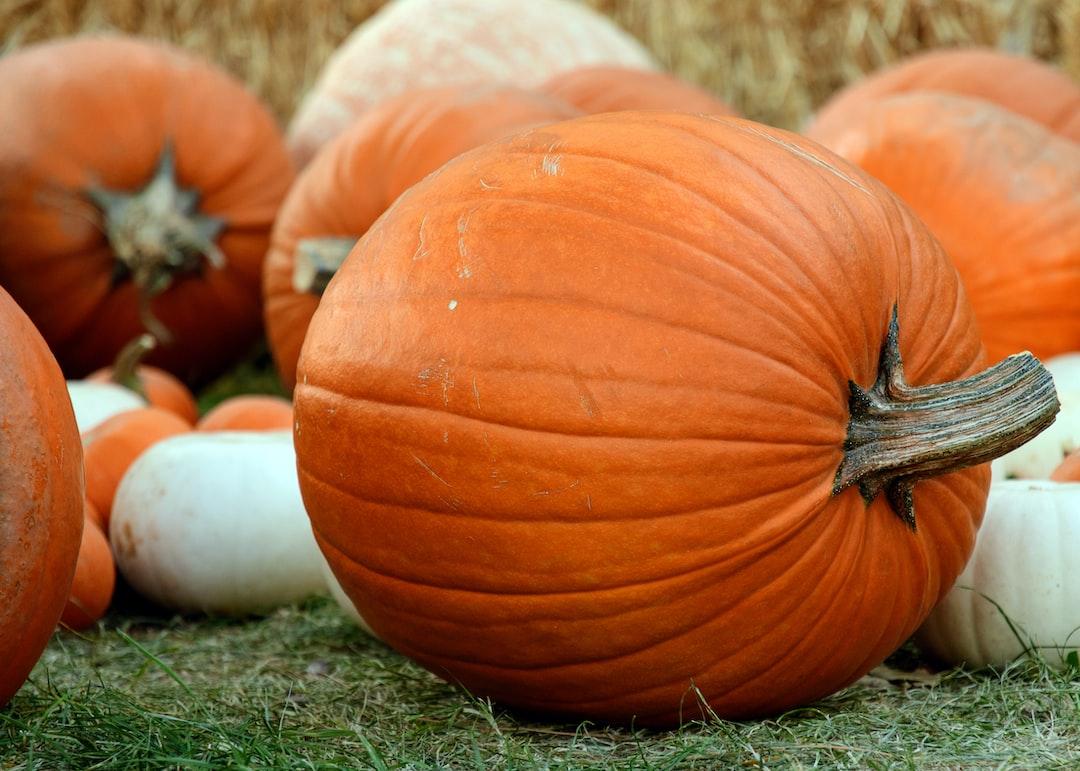 Pumpkin Bounty