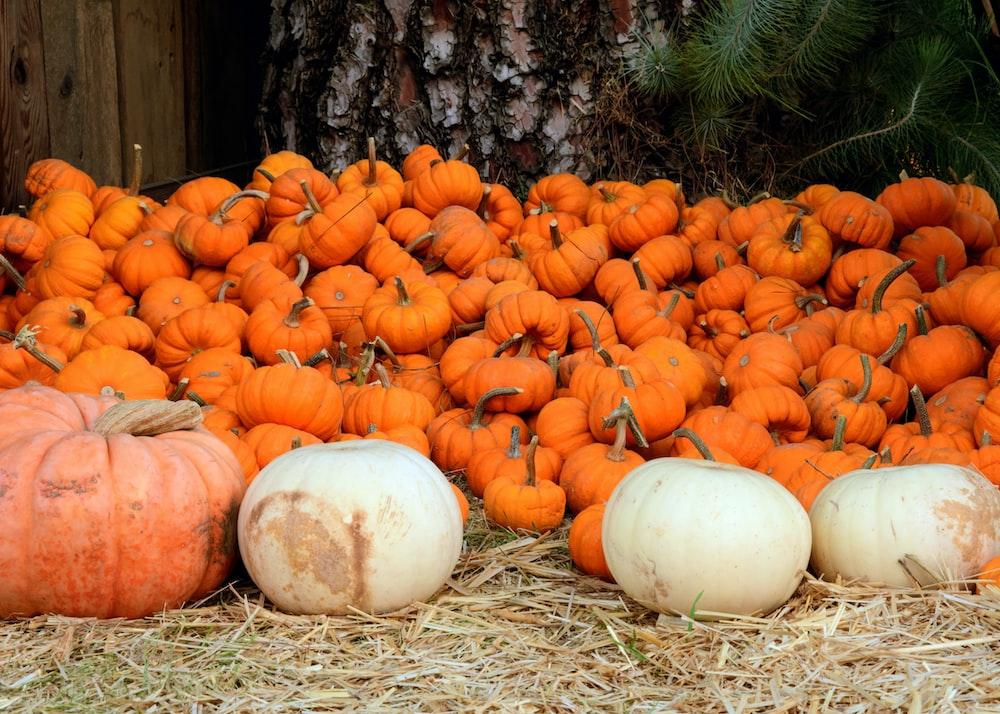 bunch of pumpkin