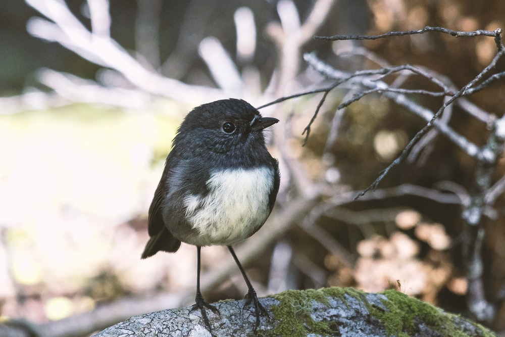 selective focus of black bird perched on stone