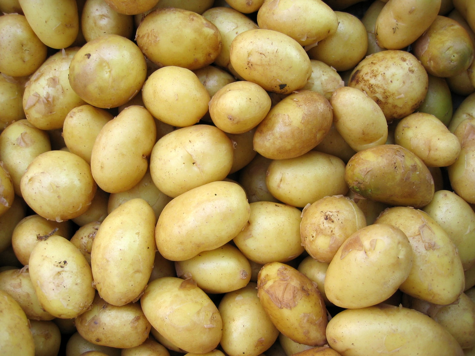 potatoes and pregnancy health risks