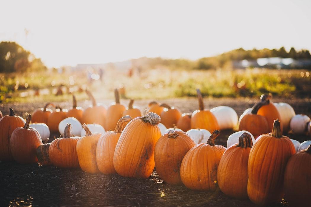 Pumpkins in a pumpkin patch for Fall Bucket List