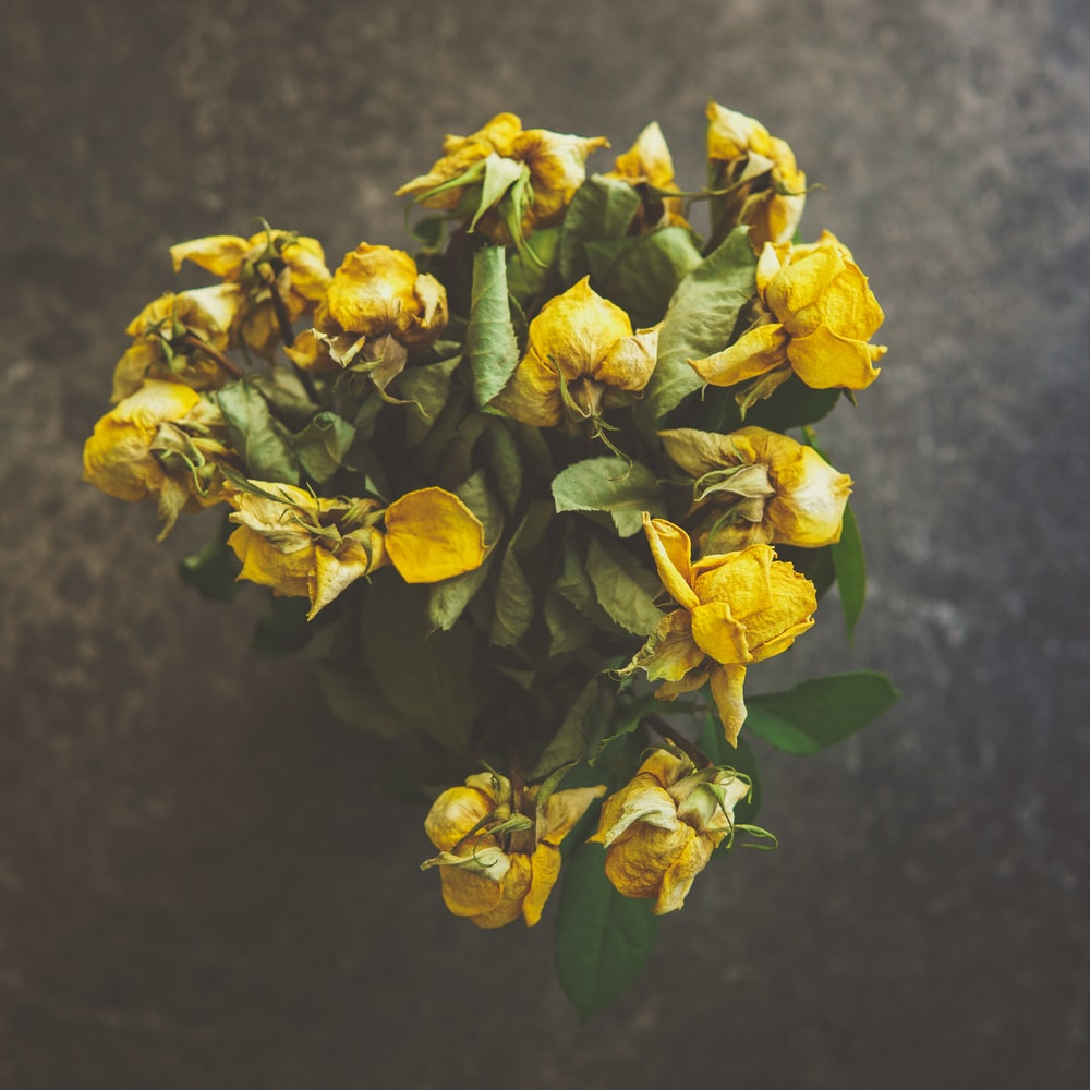 selective focus photography of yellow rose flower arrangement ]