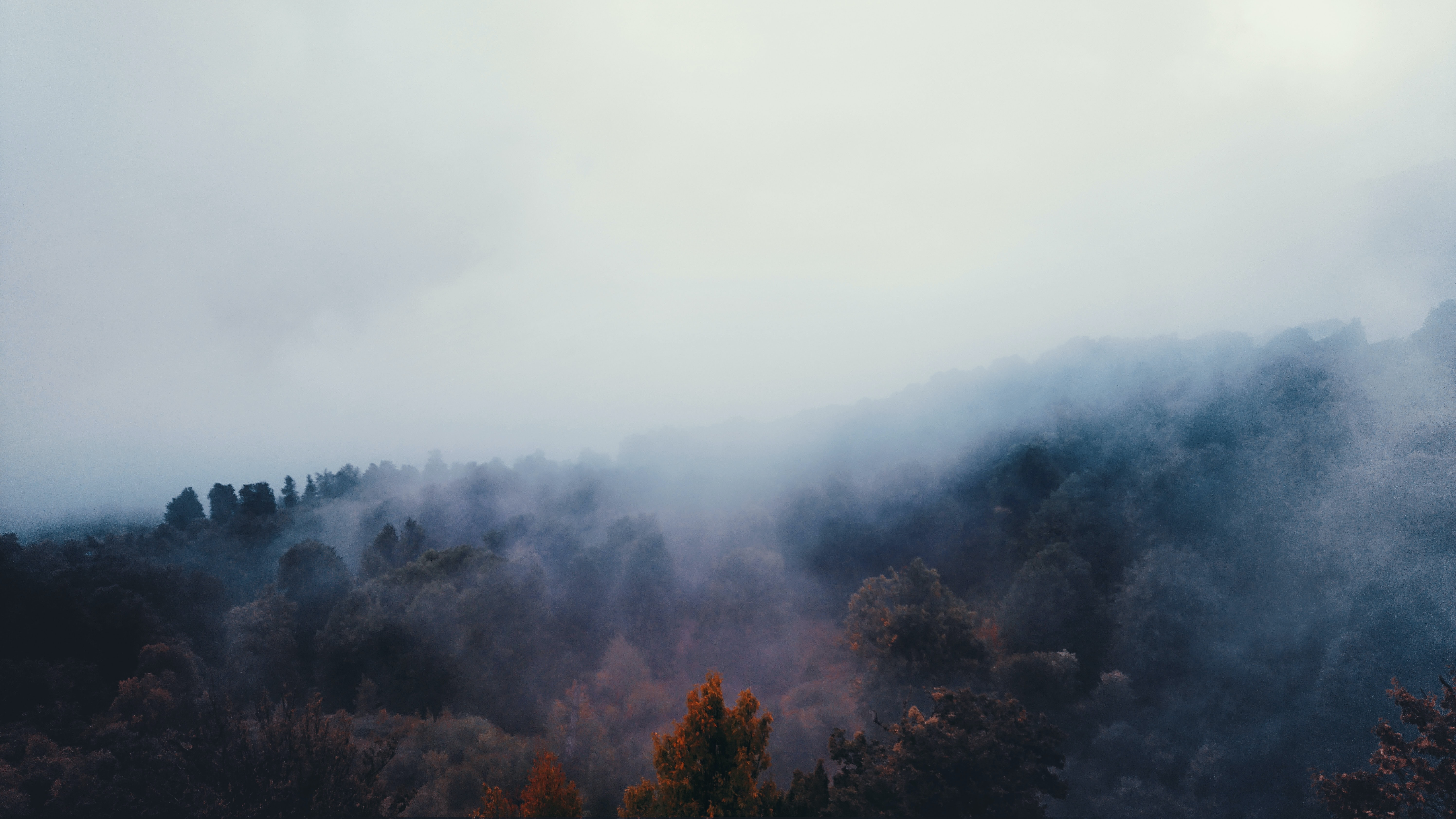 bird's eye view photo of white fogs on forest