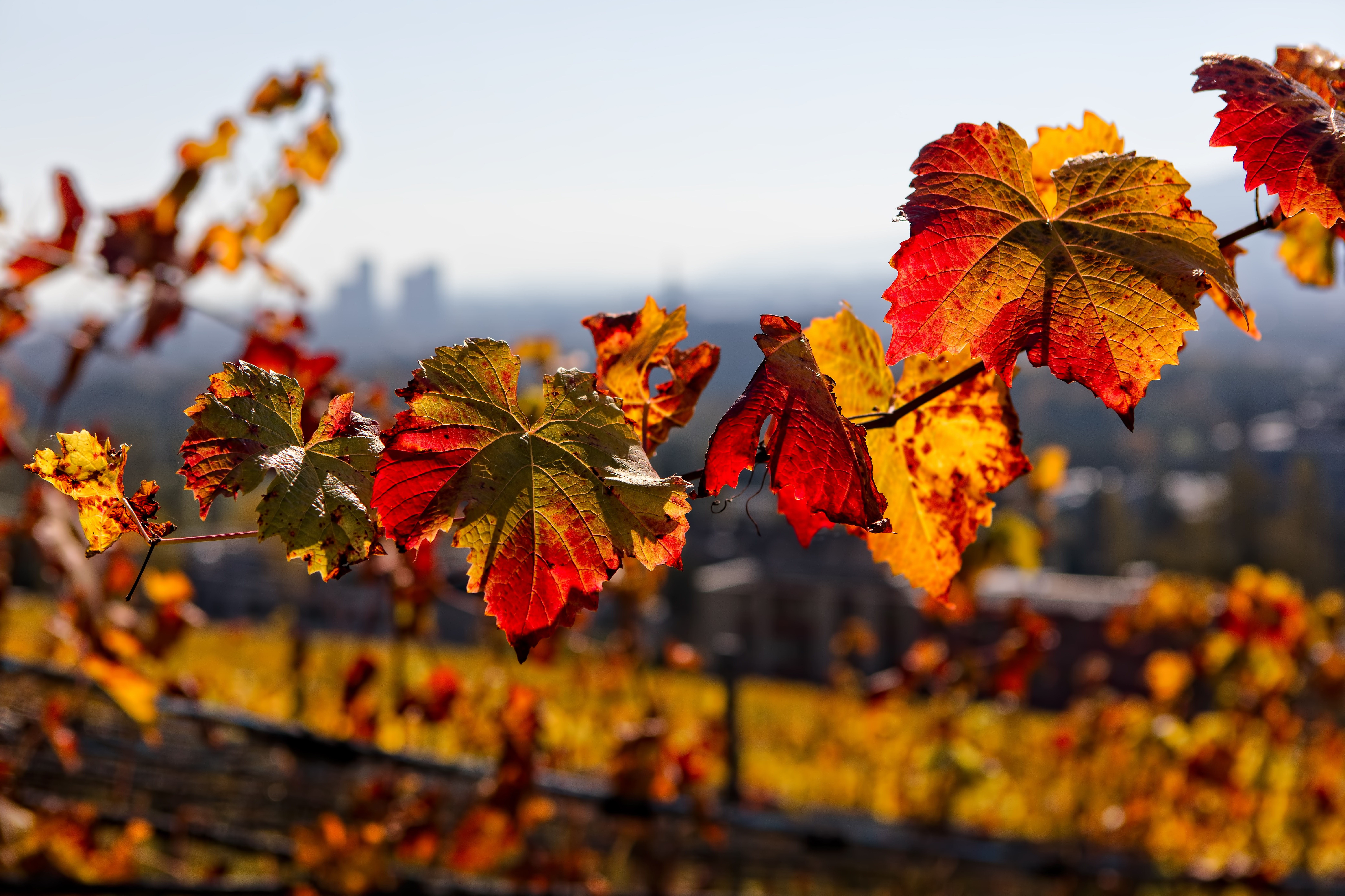 closeup photo of yellow leaves