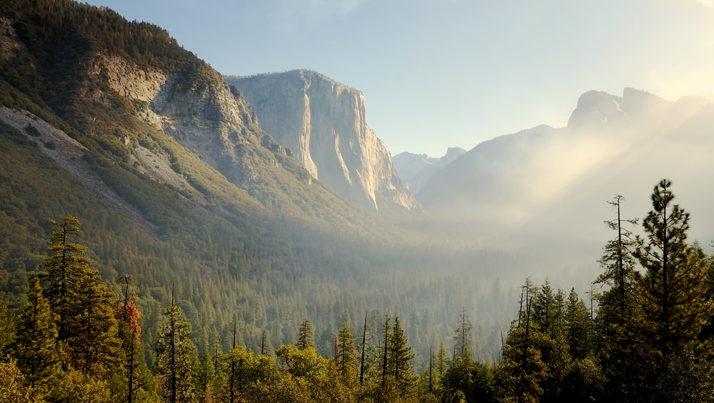 photo of trees and mountains
