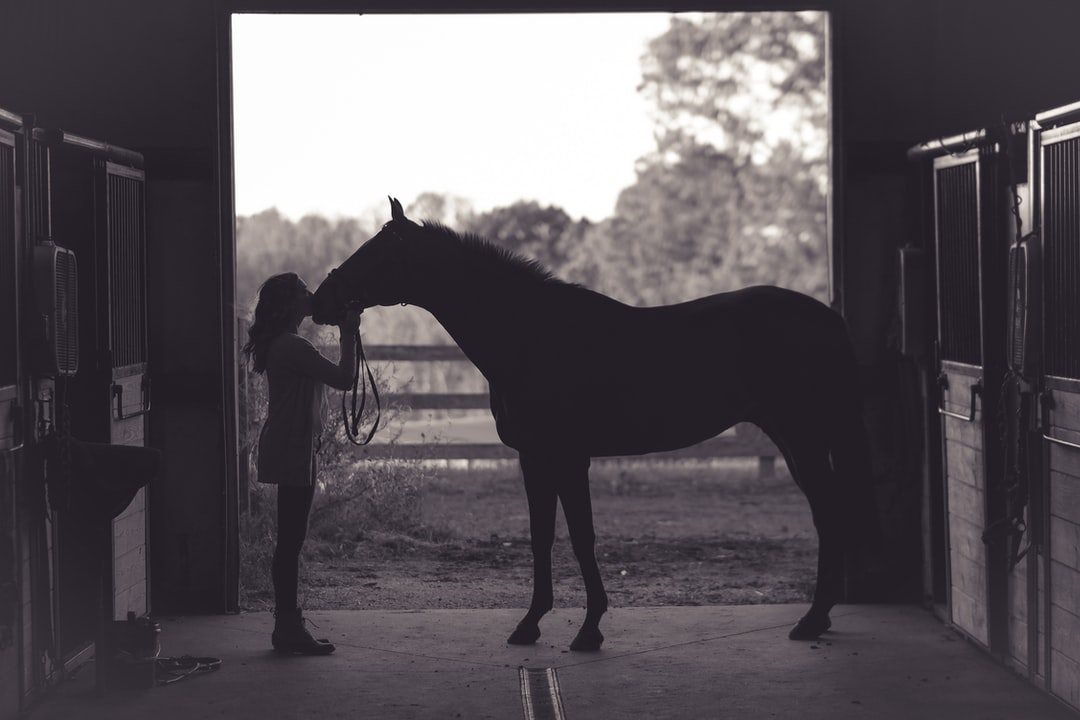 This was the last shot of the day on my high school senior shoot with Ms Hailey, she was getting ready to let her horse Wesley go out in the pasture with the other for a while and she gave him a big kiss.