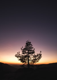 tree during golden hour