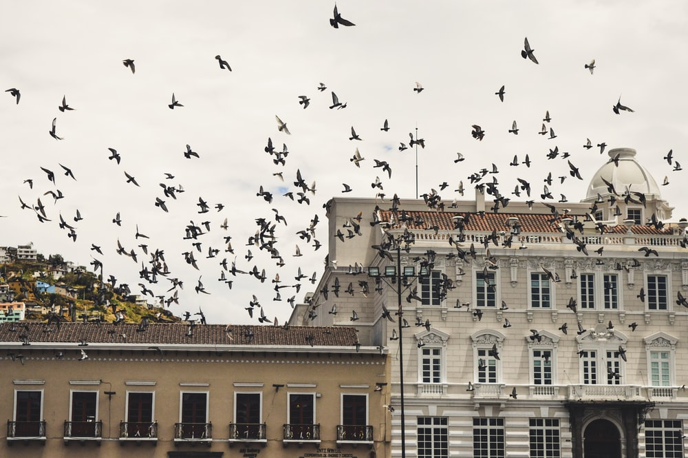 flock of black and white birds flying near concrete structure