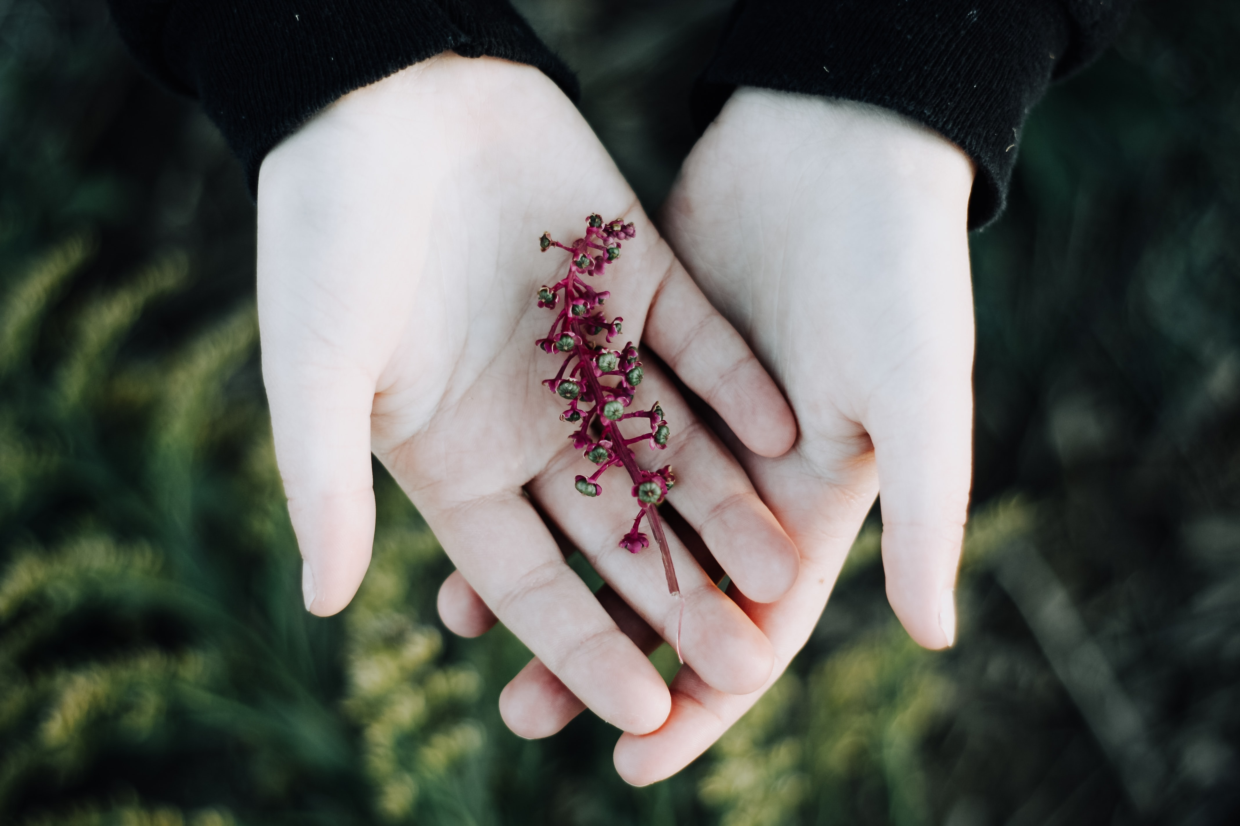 red petaled flower on person's palm