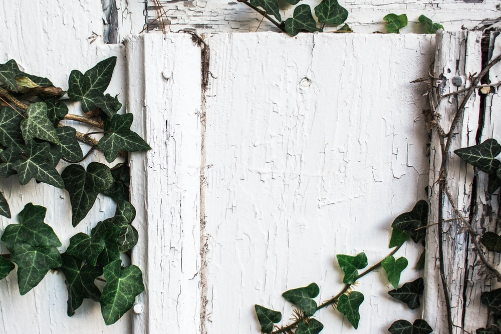 green plants on white wall