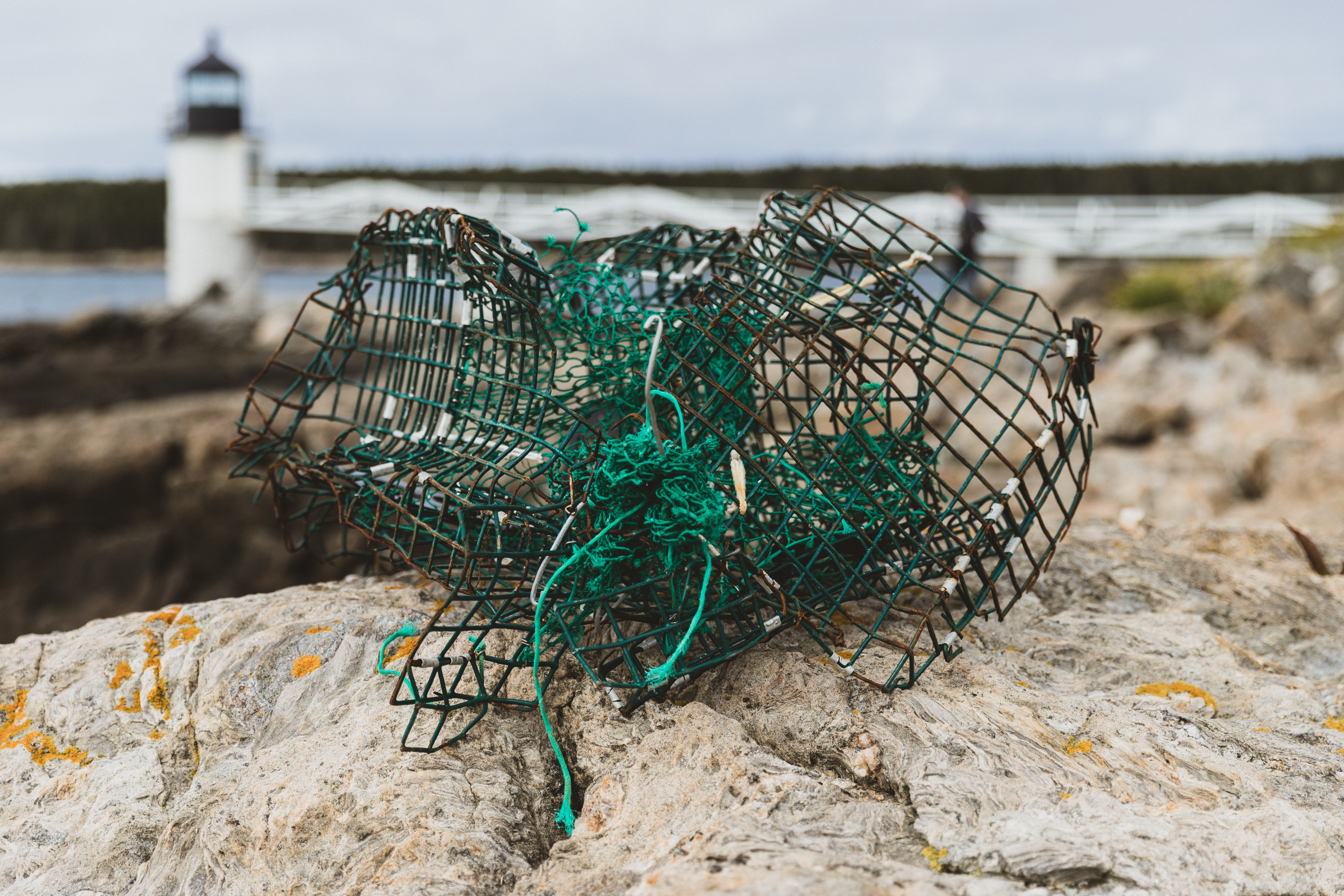 black and green net on rock