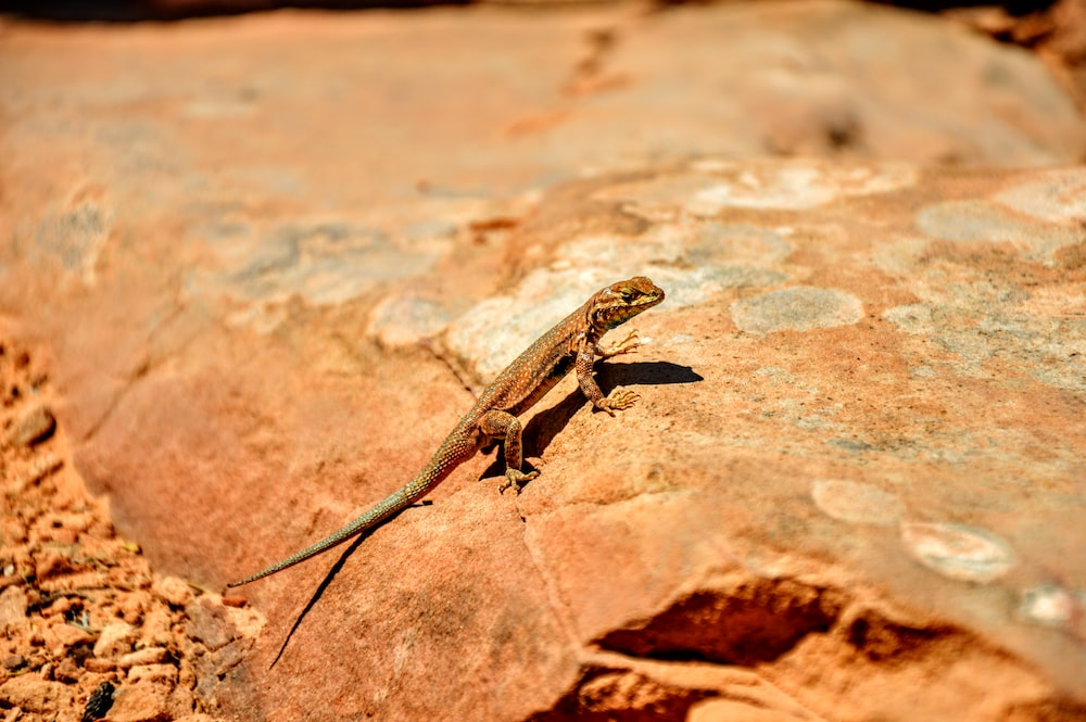 gray gecko on top of stone