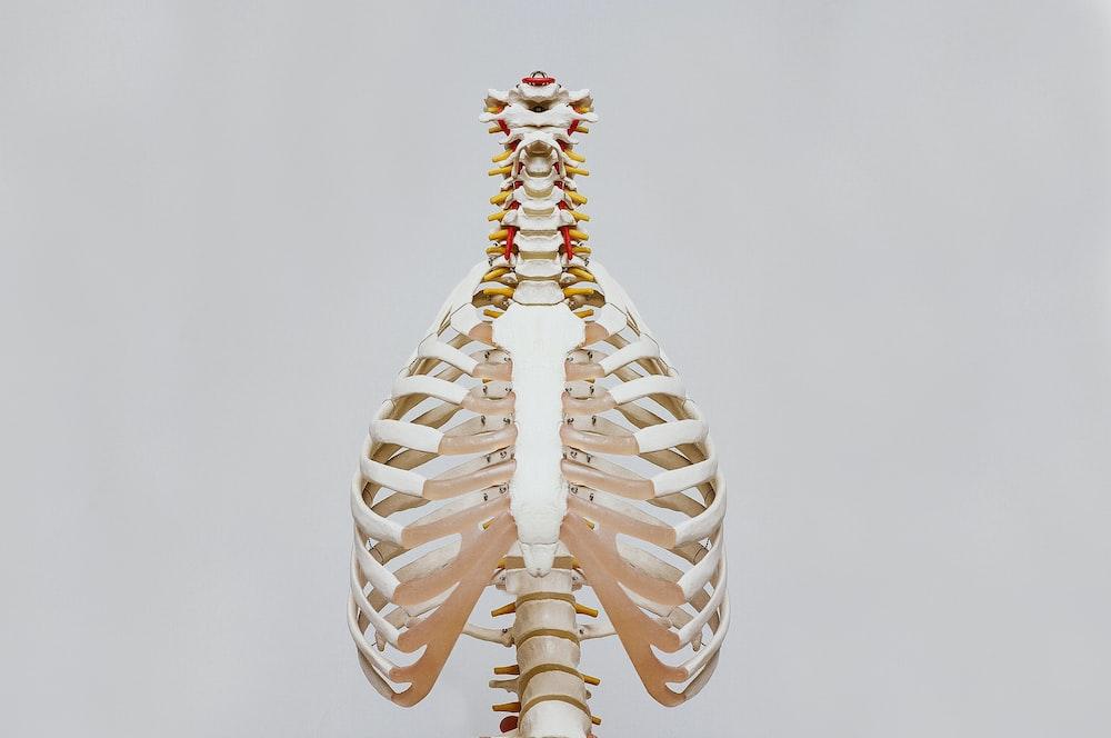 beige and white skeleton