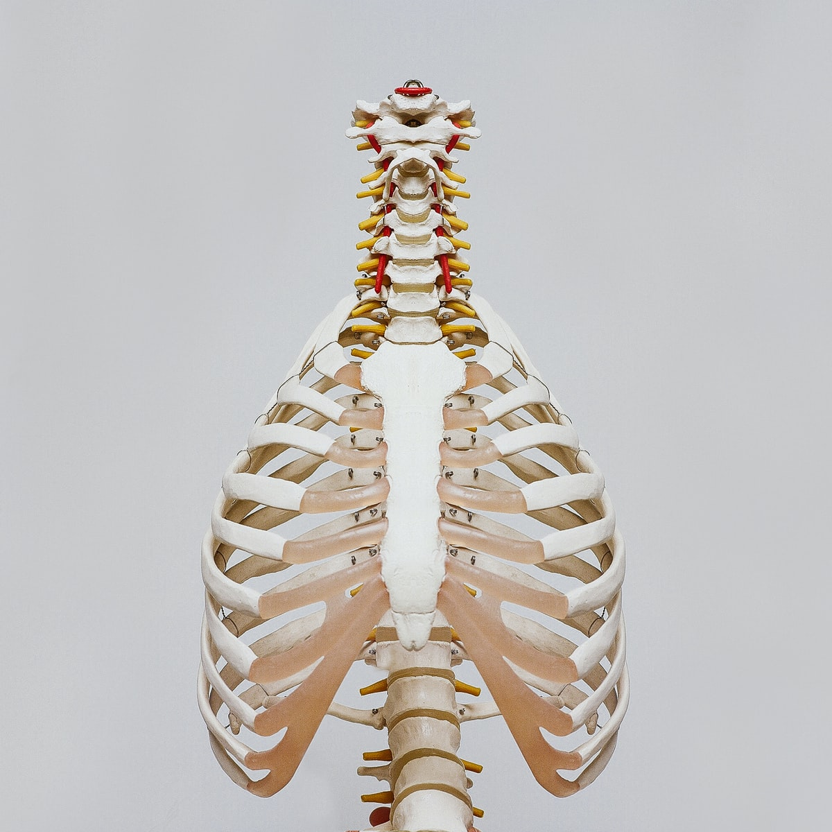 148 Skeleton Jokes - Worst Jokes Ever