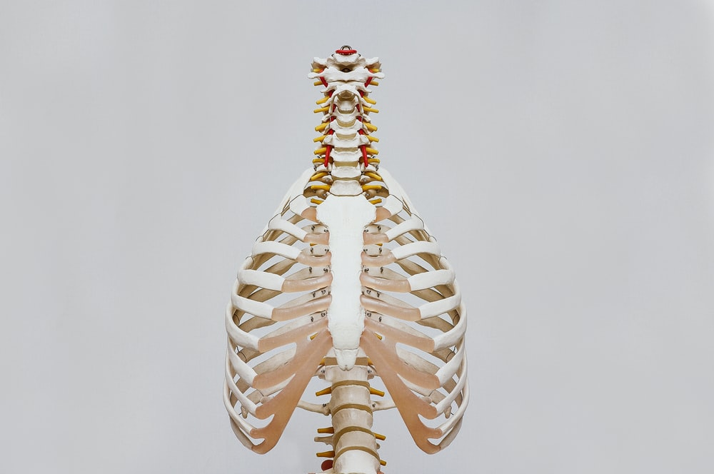 350 Human Anatomy Pictures Hd Download Free Images Stock Photos On Unsplash