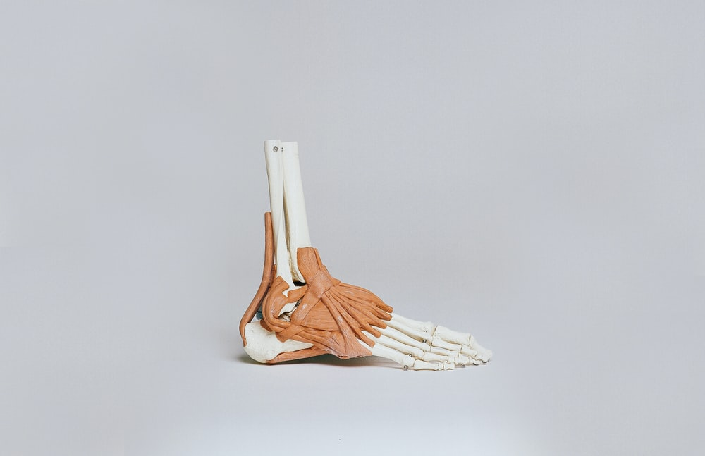 brown and white skeleton foot