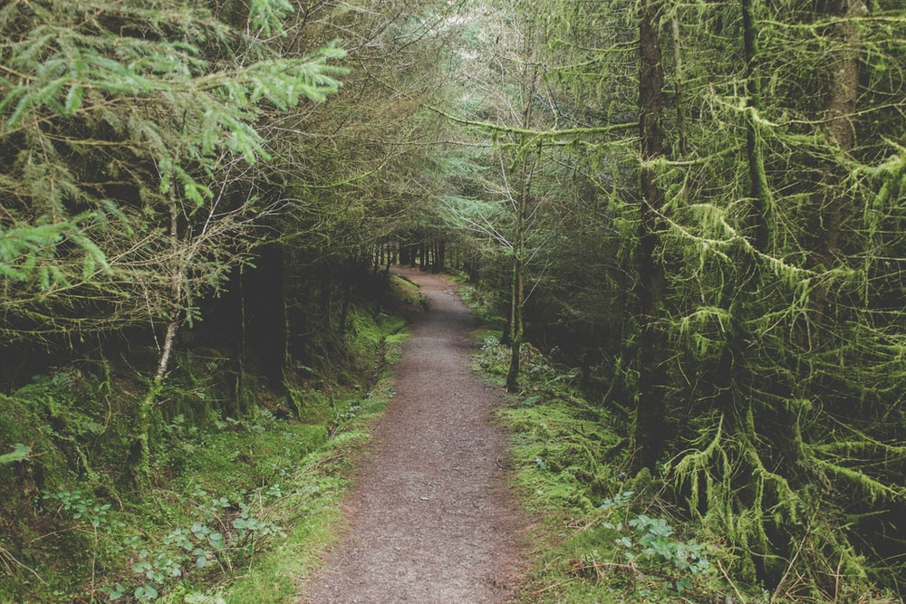 landscape photography of narrow road in the forest