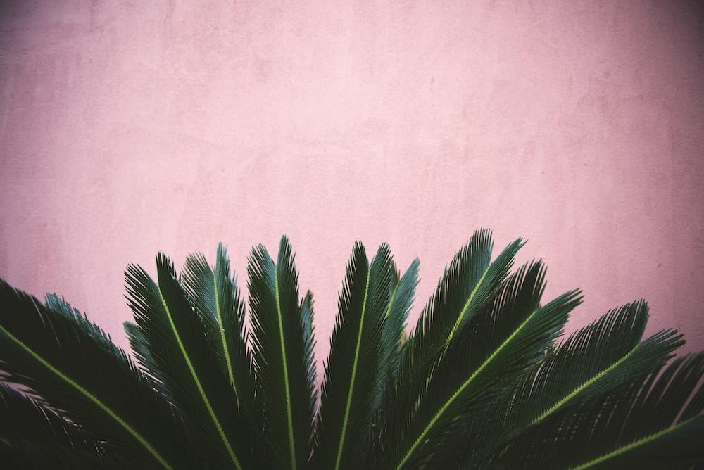 zago plant