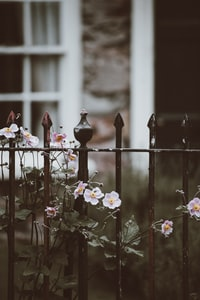 selective focus photography of pink petaled flowers near fence