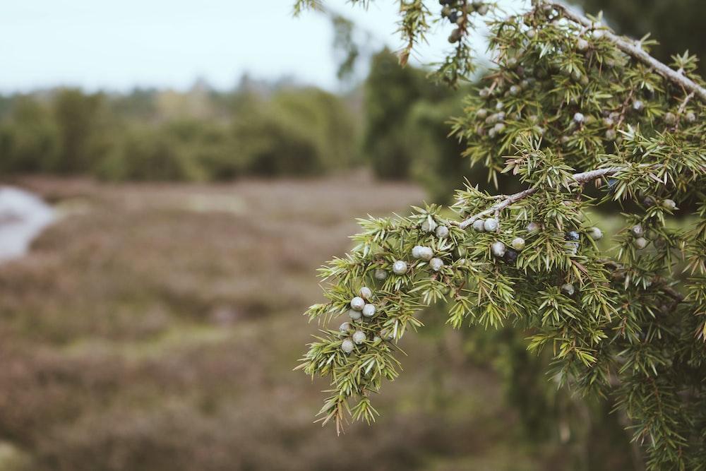 green leafed tree in macro shot