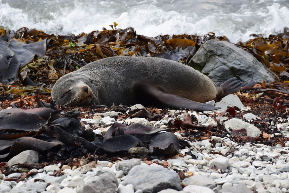 black seal laying on the ground