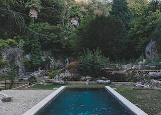 pool between green grass near tree