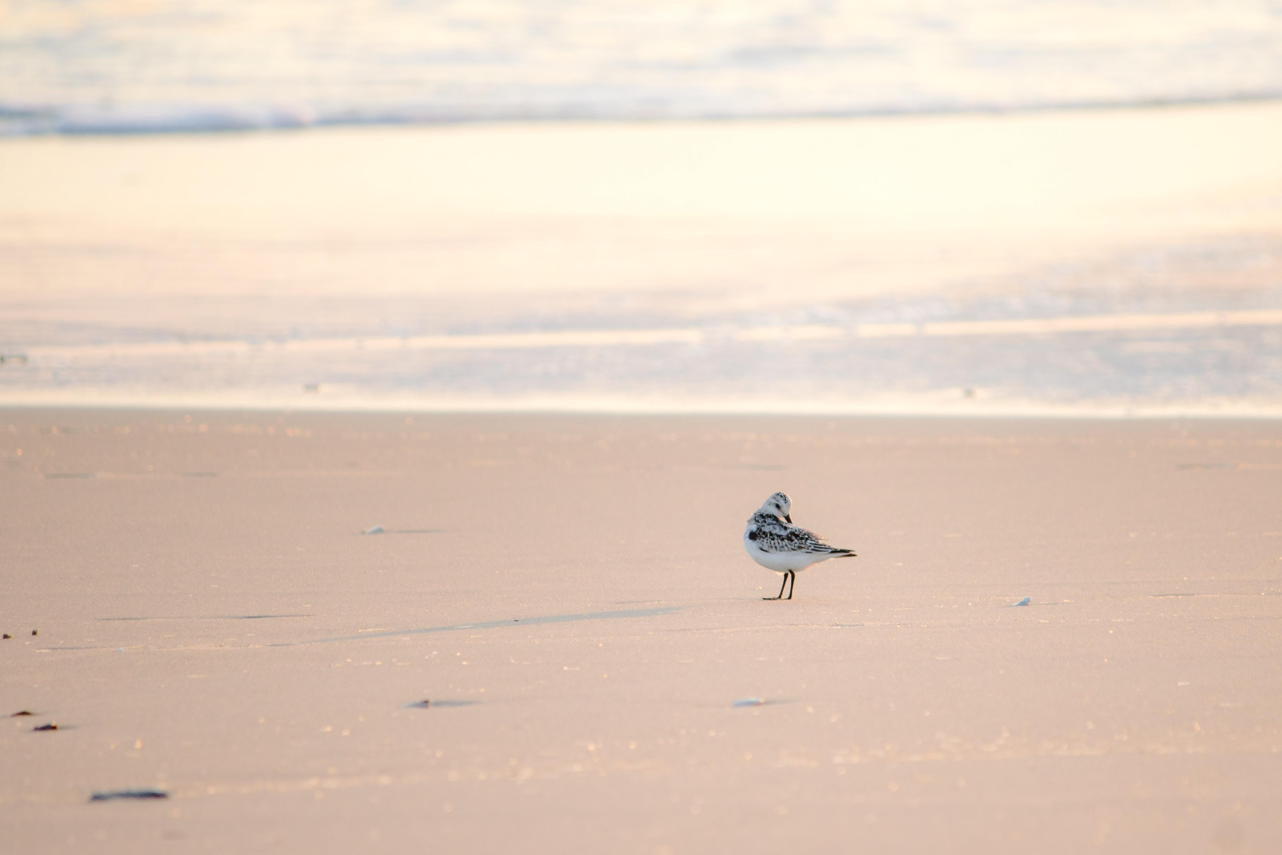 white bird perch on brown sand
