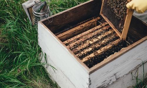 bees pickup line
