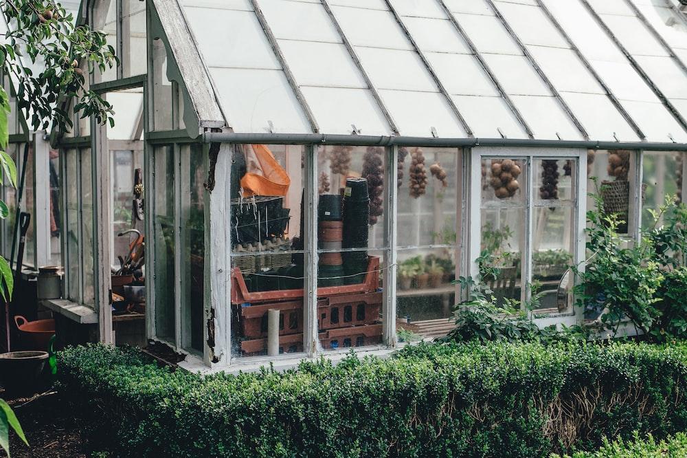 green plants near white storage shed