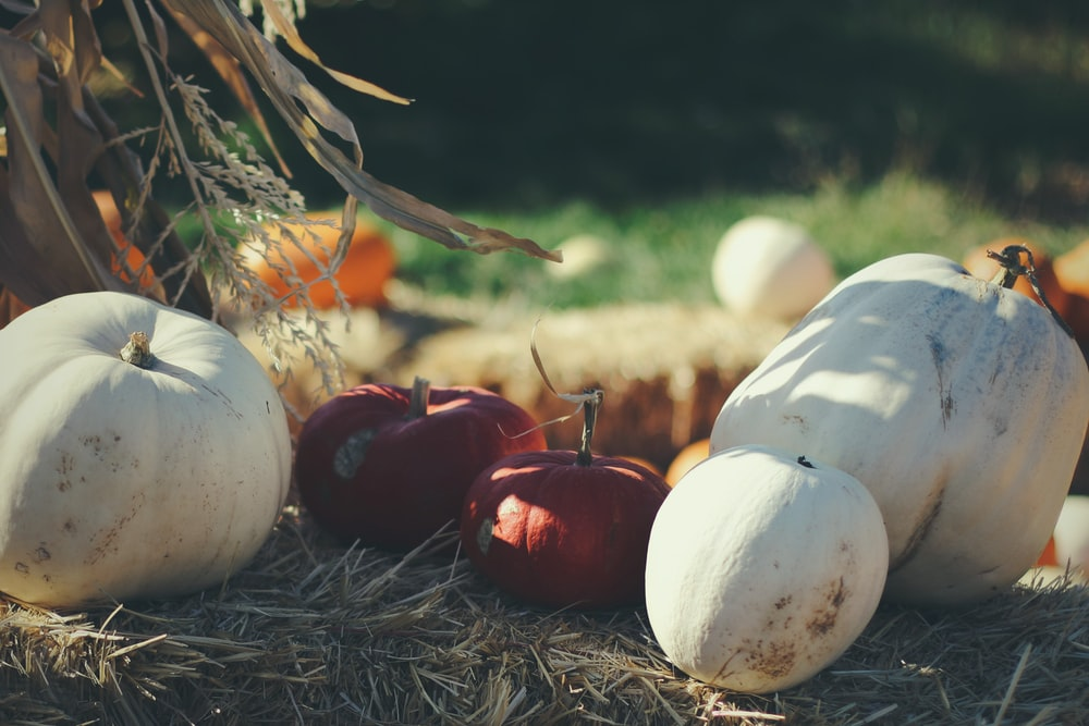 four white and two red squashes on brown hays