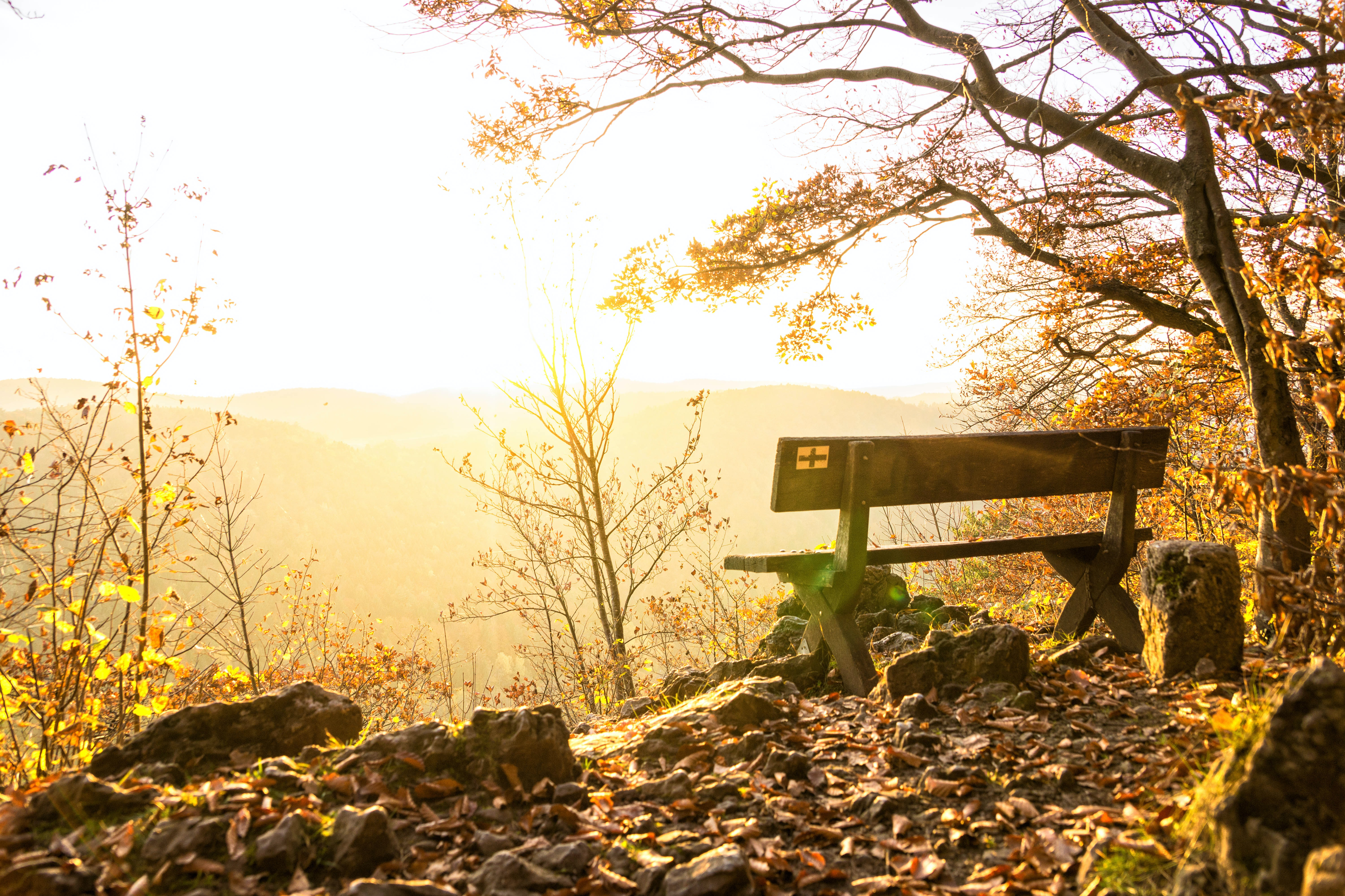 brown wooden bench beside leafless tree during golden hour