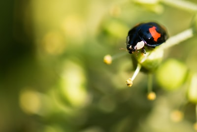 black and orange bug