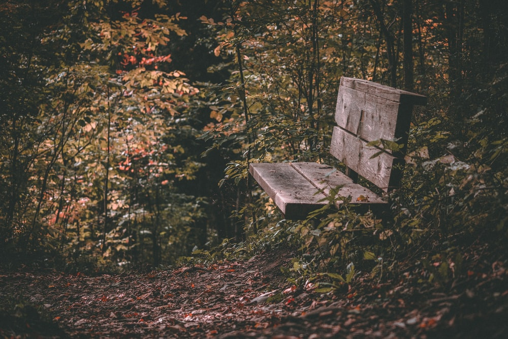 brown wooden bench on forest