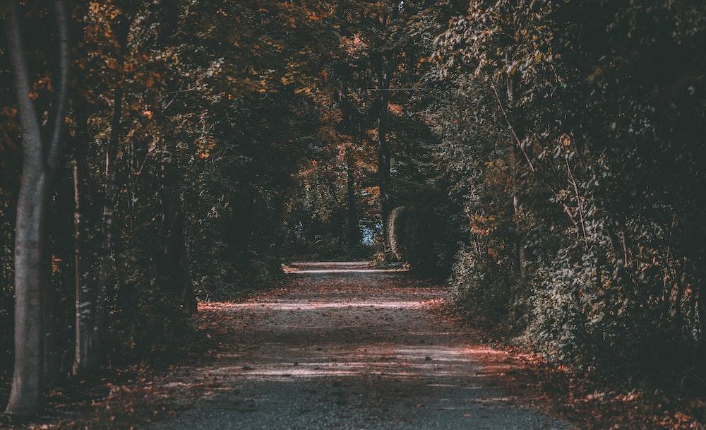 winding road between forest