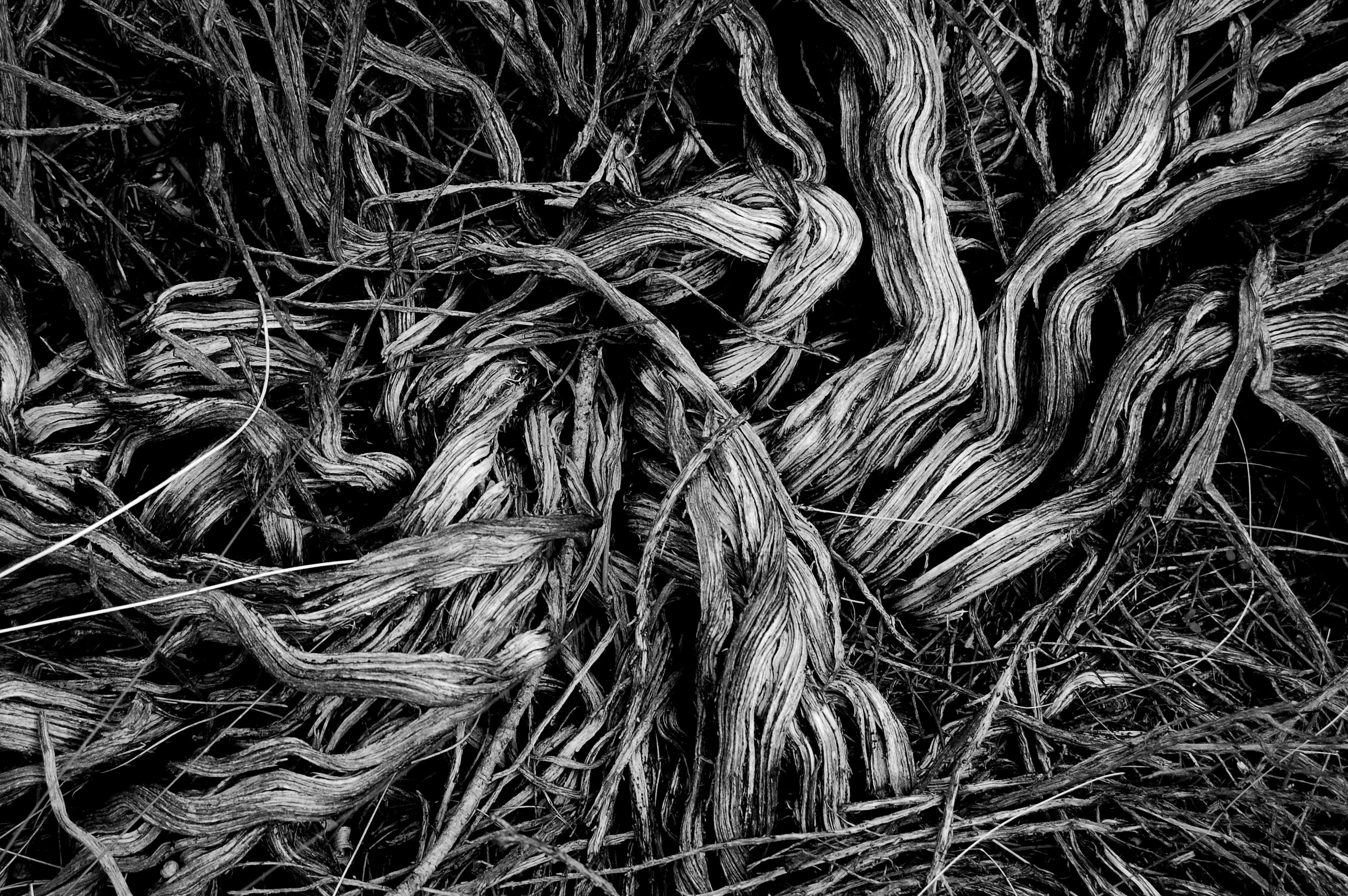 grayscale photograph of grass